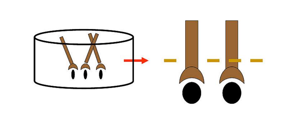 نموذج للخلايا الجذعية